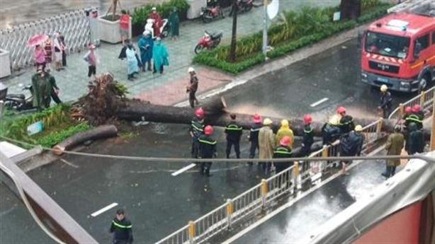 Cây đổ chết người ở TP.HCM: Do cao ốc kế bên?