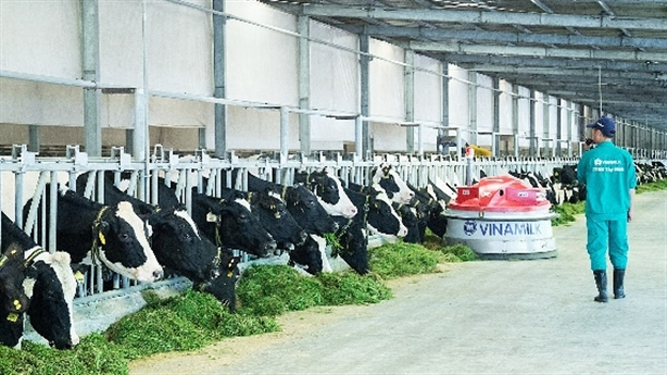 Hệ thống trang trại bò sữa Vinamilk:Mô hình nông nghiệp bền vững