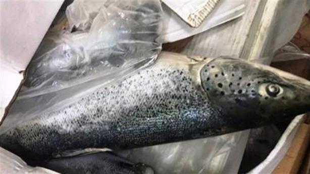 2,5 tấn cá hồi hết hạn sử dụng đang được tái chế