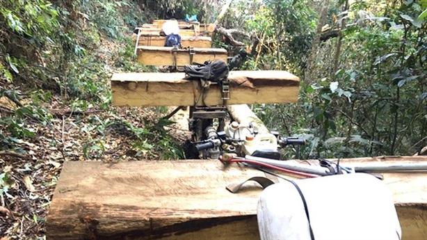 Trồng sâm Ngọc Linh để mất rừng: Kiểm soát thế nào?