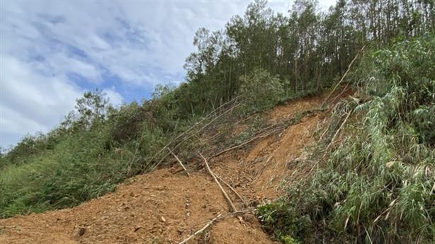 Sự thật đắng về cây keo: Đất nghèo trả giá?