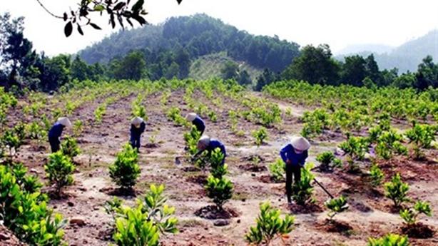 Sự thật đắng cây keo: Cắc cớ trồng rừng thay thế