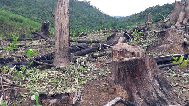 Bắt tạm giam 2 cán bộ Ban quản lý rừng phòng hộ
