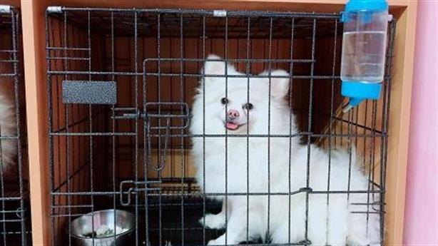 Chó mèo ăn Tết khách sạn, chủ rớm nước mắt chia tay