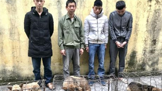 Trộm gần 3 tạ chó trong 2 ngày: Lấy dây buộc mõm
