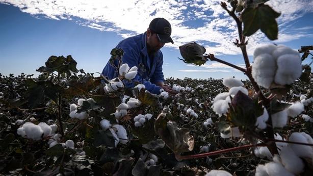SCMP: Nhà phân tích bối rối vì xuất khẩu Trung Quốc-Mỹ tăng