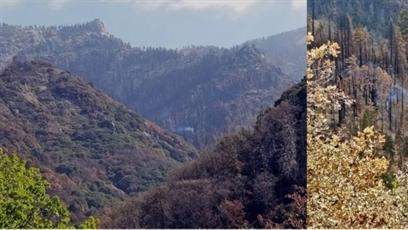 Vào rừng gần một năm sau đám cháy, thấy điều chấn động