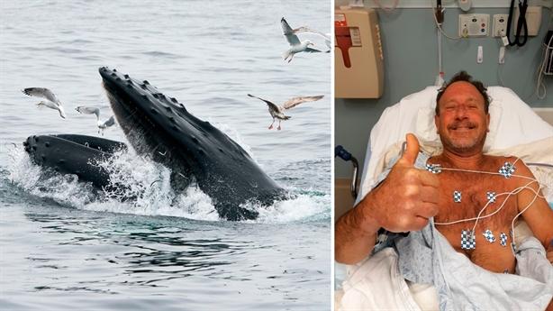 Đi săn tôm hùm bị cá voi nuốt: Kết kinh ngạc