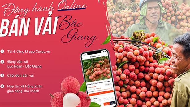 Nông sản 'tắc' đầu ra: Bài học tiêu thụ vải Bắc Giang