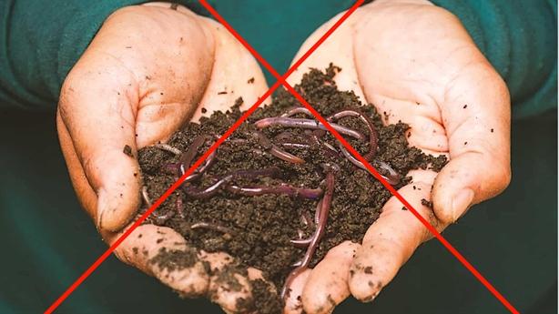 Sẽ xử lý người loan tin giun đất chữa COVID-19