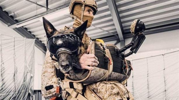 Chó nghiệp vụ Mỹ nhảy dù đổ bộ từ máy bay