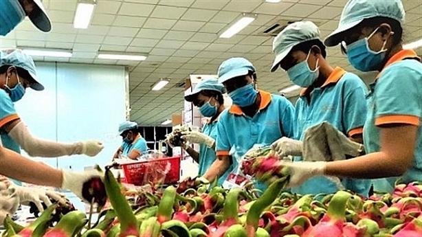 Thanh long xuất sang Trung Quốc có virus SARS-CoV-2: Nói một phía