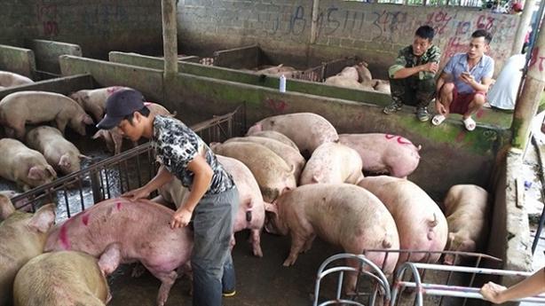 Giá lợn hơi giảm sâu, bán lẻ vẫn neo cao, vì đâu?