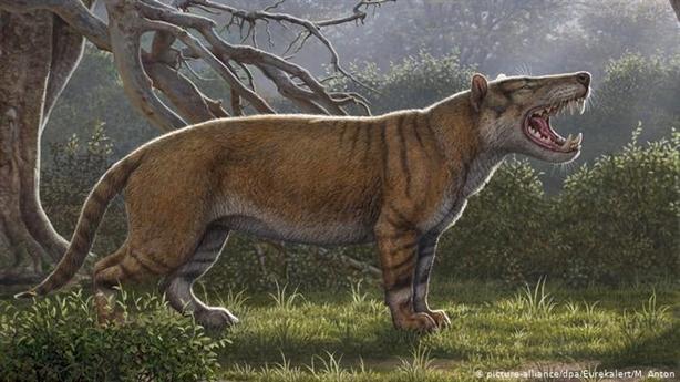 Phát hiện sư tử khổng lồ, ăn mồi to ngang voi