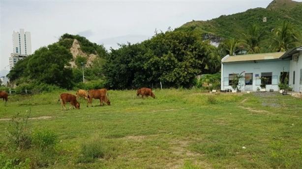 'Đất vàng' hơn 2ha ven Vịnh Nha Trang cỏ mọc um tùm
