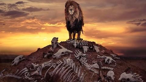 'Vua sư tử' đứng trên gò xương gây tranh cãi: Sự thật?