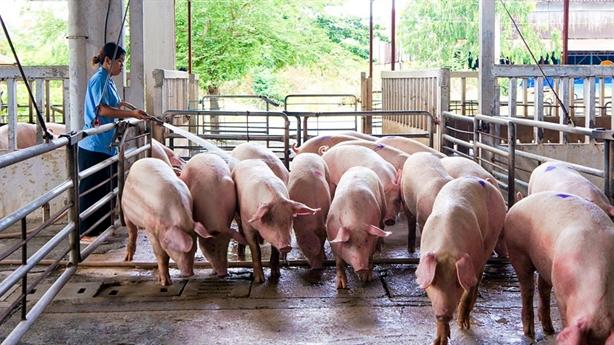 Giá lợn hơi tụt sốc: 'Can thiệp cũng không giải quyết được'