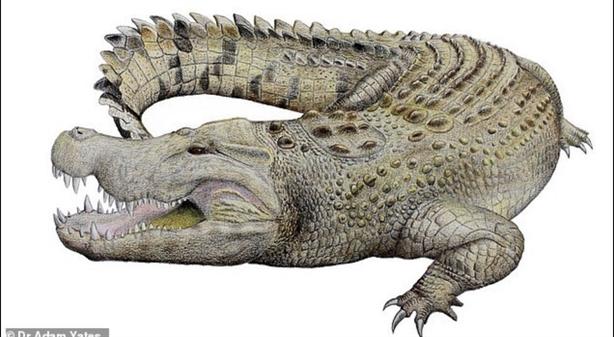 Phát hiện loài cá sấu chén thịt cả chim khổng lồ