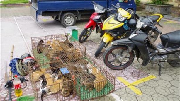 Nữ quái điều hành nhóm trộm chó, mèo: Bán thịt ở nhà